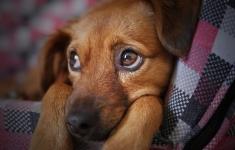 Vidas de perros